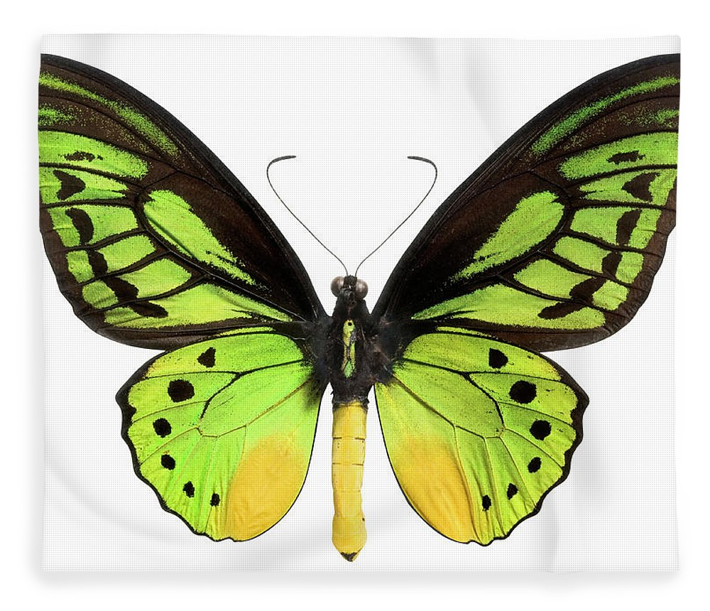 White Background Fleece Blanket featuring the photograph Butterfly Lepidoptera With Green, Black by Flamingpumpkin
