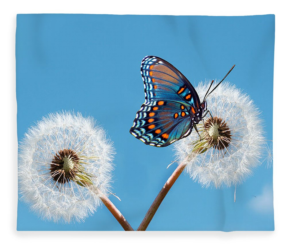 Animal Themes Fleece Blanket featuring the photograph Butterfly On Dandelion by Maria Wachala