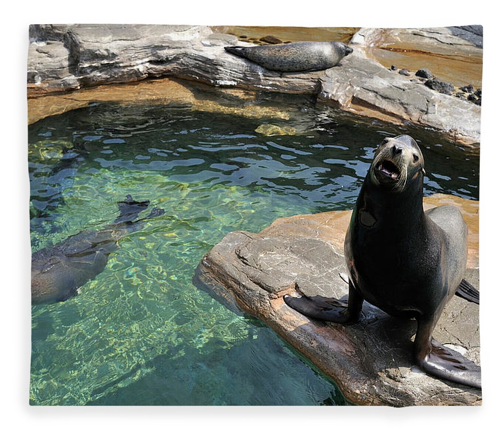 Sea Lion Fleece Blanket featuring the photograph California Sea Lion And Spotted Seal by T. Nakamura Volvox Inc.