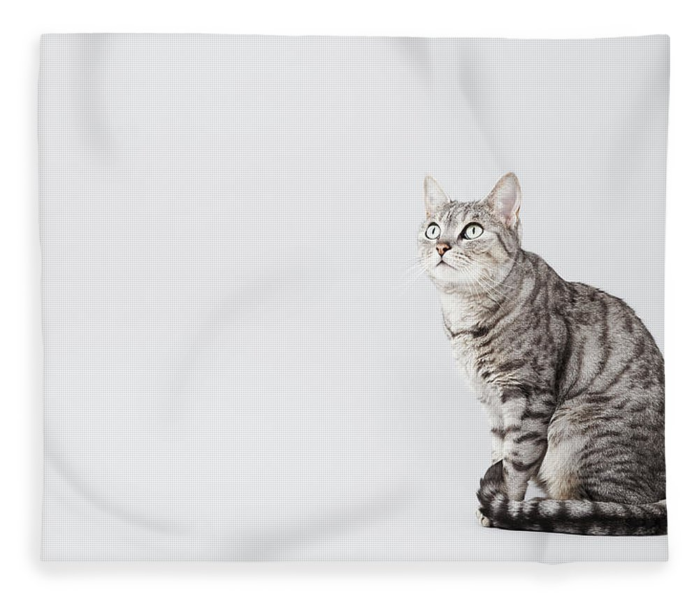 Pets Fleece Blanket featuring the photograph Cat Looking Up by Lisa Stirling