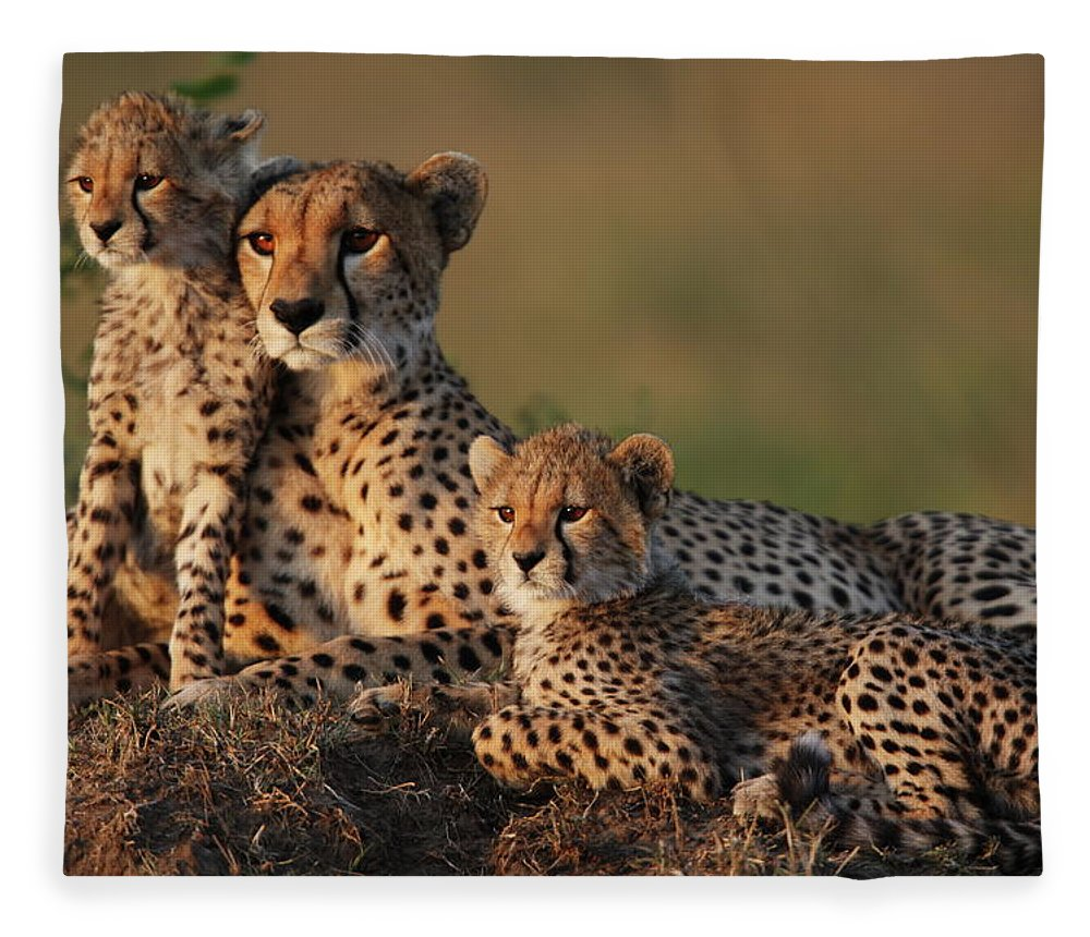 Kenya Fleece Blanket featuring the photograph Cheetah Family by Gp232