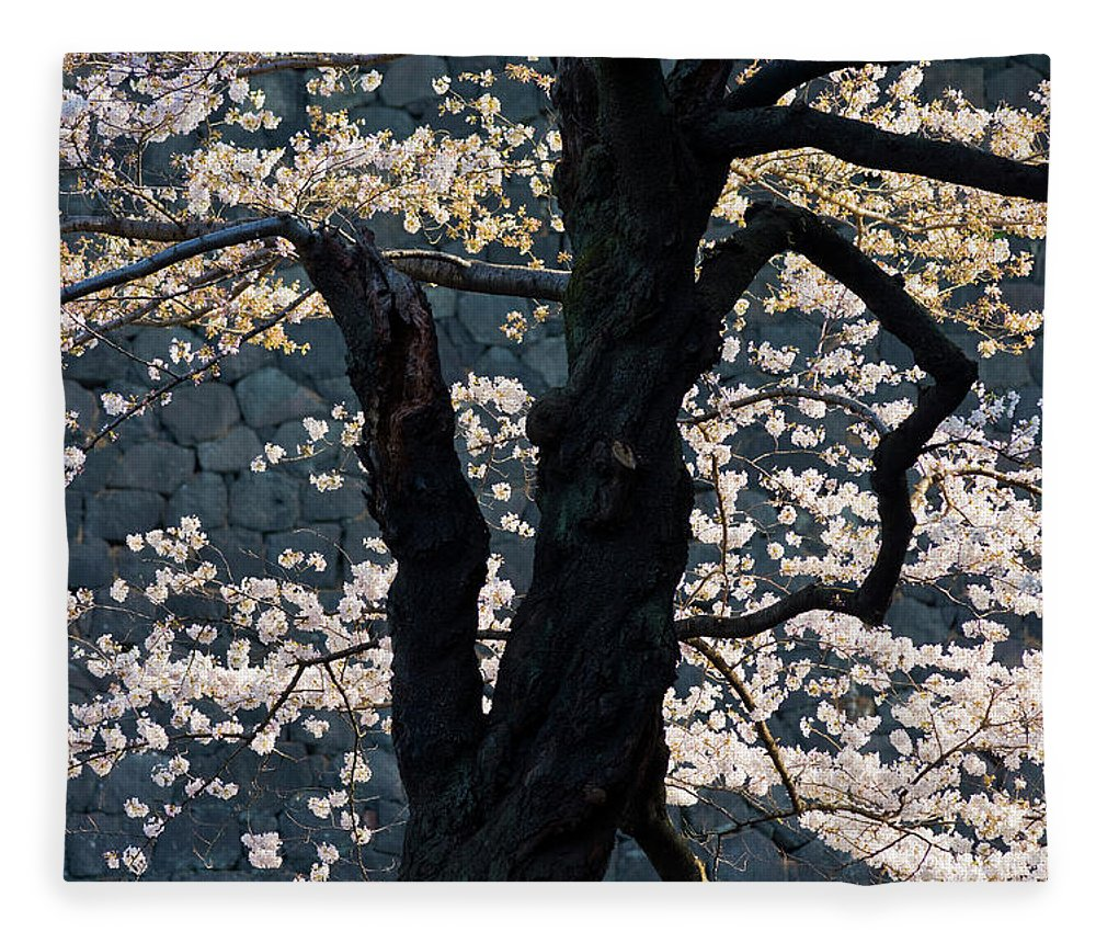 Tranquility Fleece Blanket featuring the photograph Cherry Blossoms At The Imperial Palace by B. Tanaka