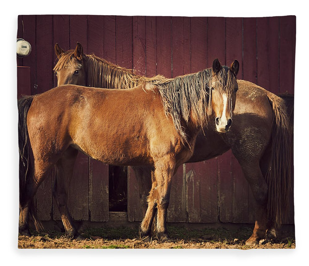 Horse Fleece Blanket featuring the photograph Chestnut Horses by Thepalmer