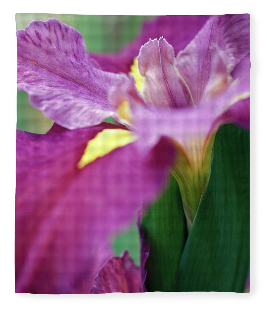 Close Up Of A Purple Iris Flower Fleece Blanket For Sale By Rebecca E Marvil
