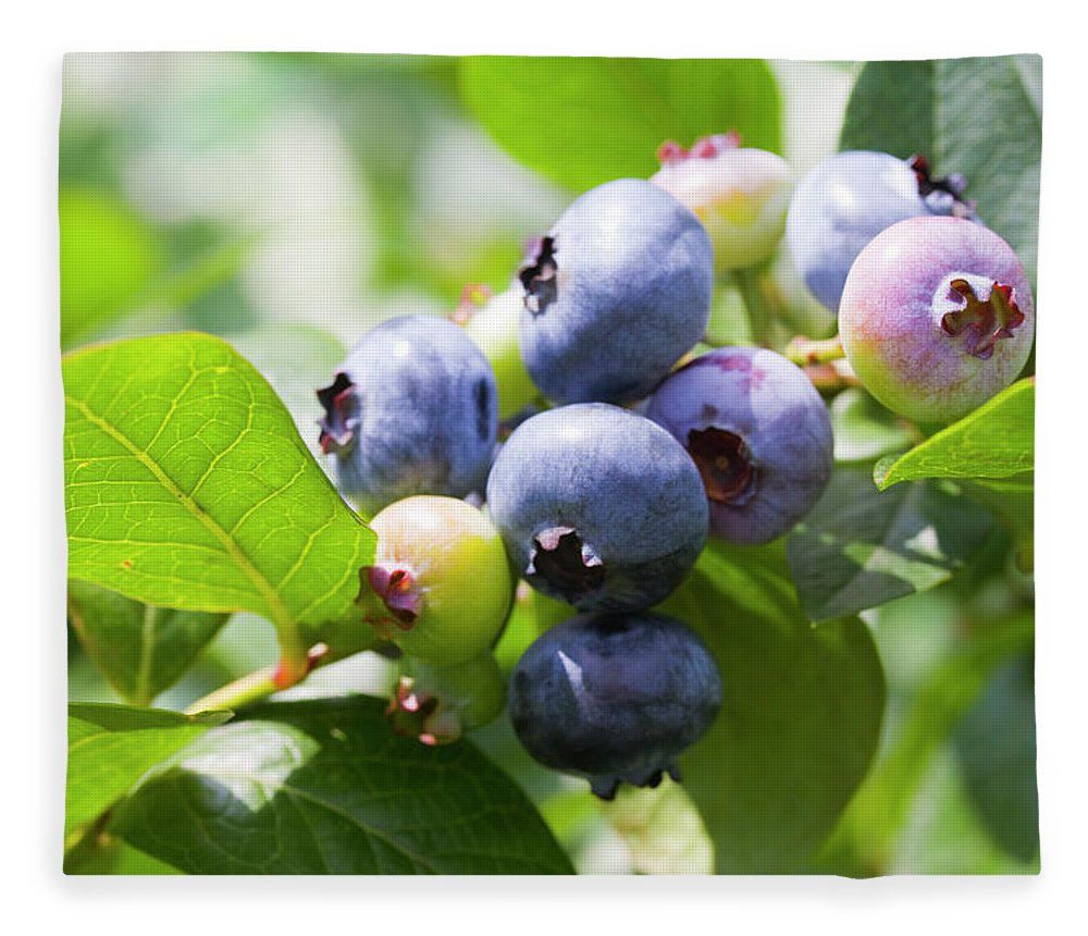 Yamanashi Prefecture Fleece Blanket featuring the photograph Close-up Of Blueberry Plant And Berries by Daisuke Morita