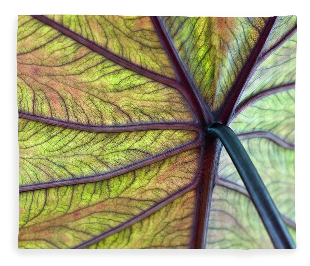 Voodoo Doll Fleece Blanket featuring the photograph Close Up Of Colocasia Esculenta Leaf by Deb Casso