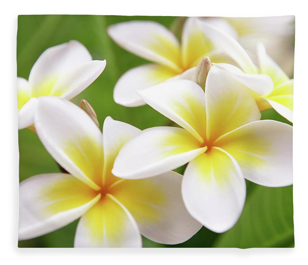 Bunch Fleece Blanket featuring the photograph Close Up Of White And Yellow Plumeria by Hidesy