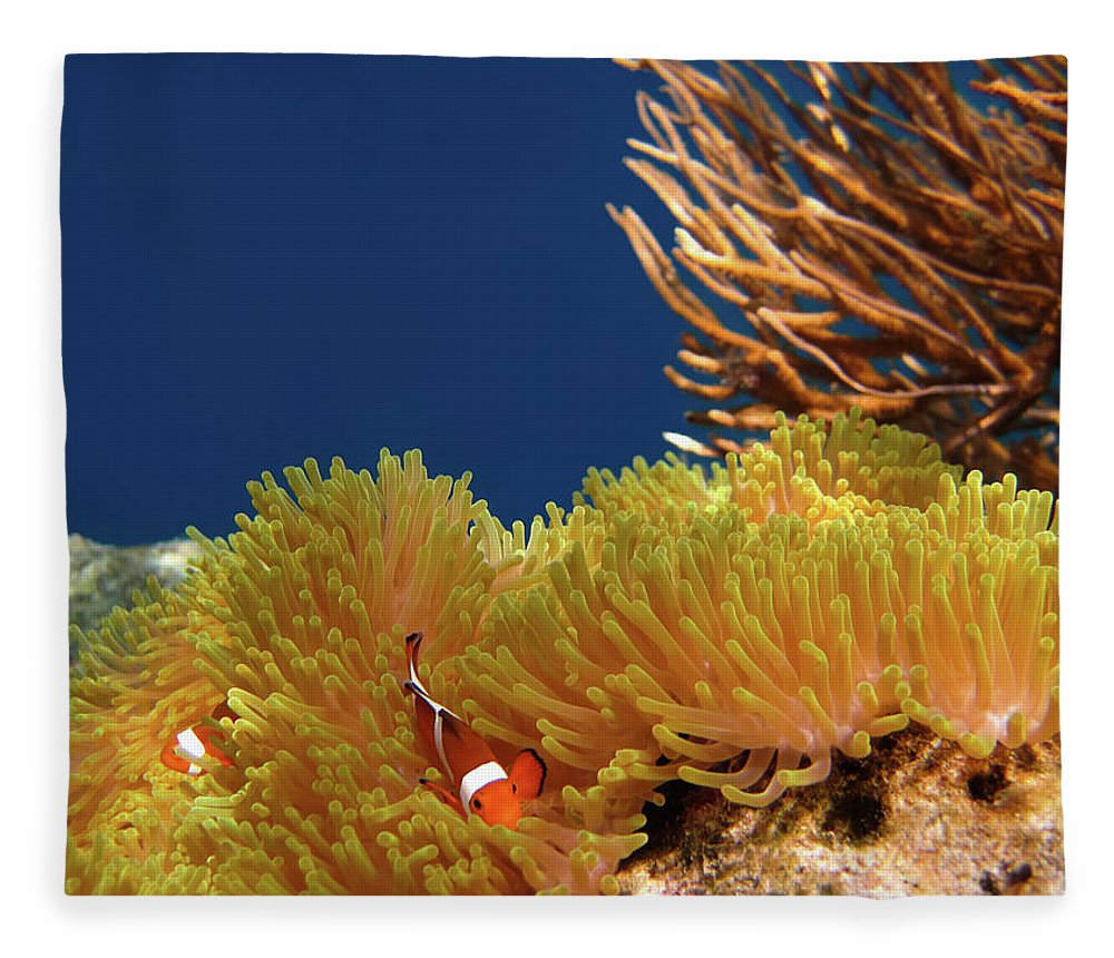 Underwater Fleece Blanket featuring the photograph Clownfish In Coral Garden - Southeast by Fototrav