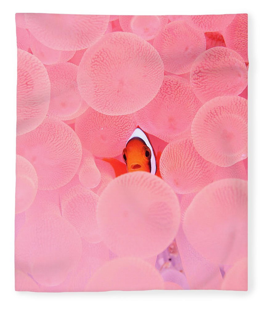 Underwater Fleece Blanket featuring the photograph Clownfish In Corals by Yusuke Okada/a.collectionrf