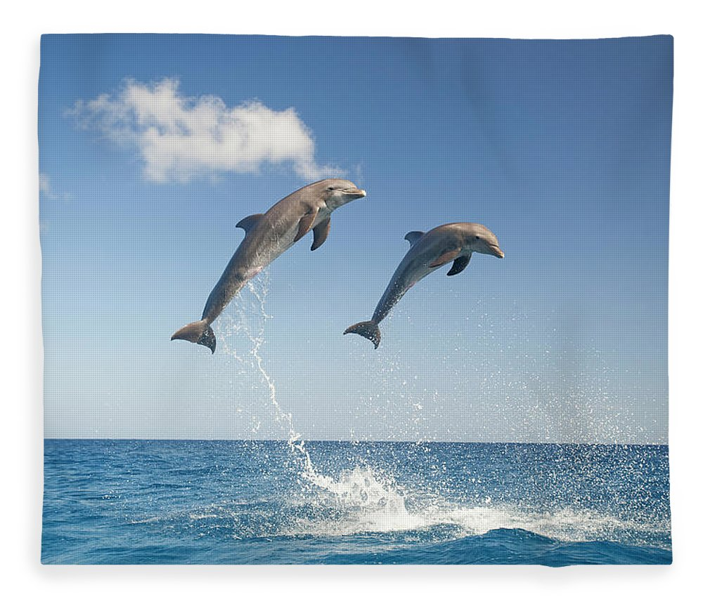 Aerodynamic Fleece Blanket featuring the photograph Common Bottlenose Dolphins Tursiops by Mike Hill