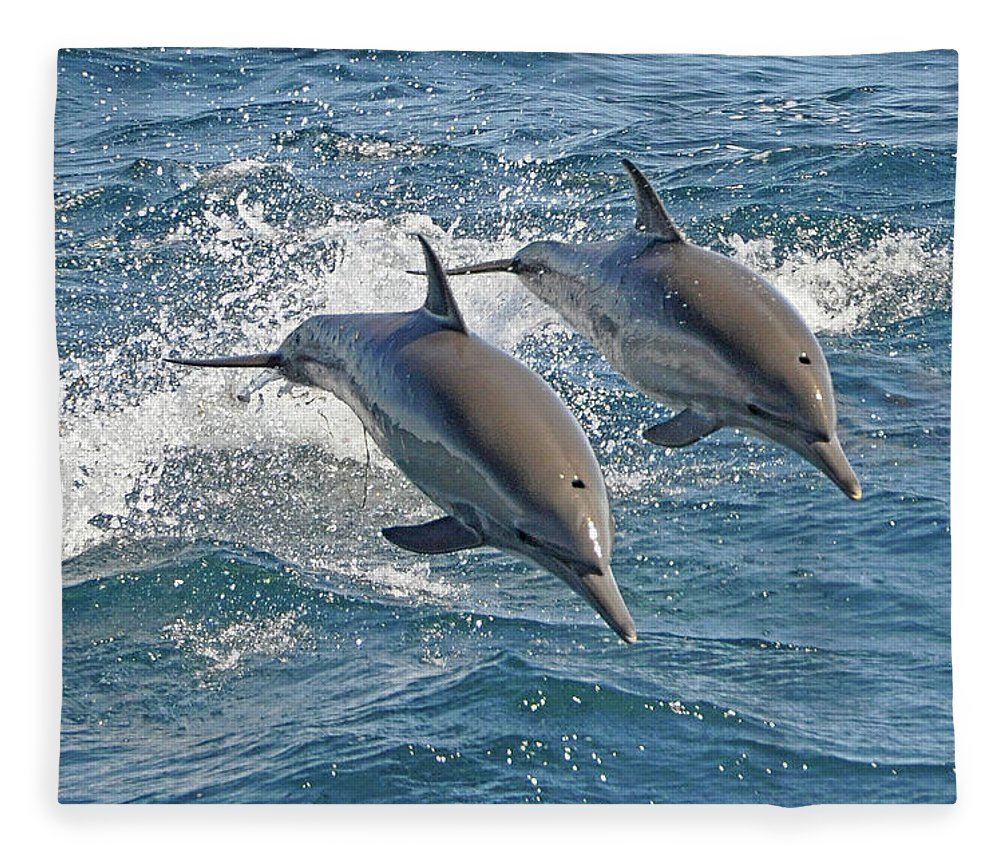 Diving Into Water Fleece Blanket featuring the photograph Common Dolphins Leaping by Tim Melling