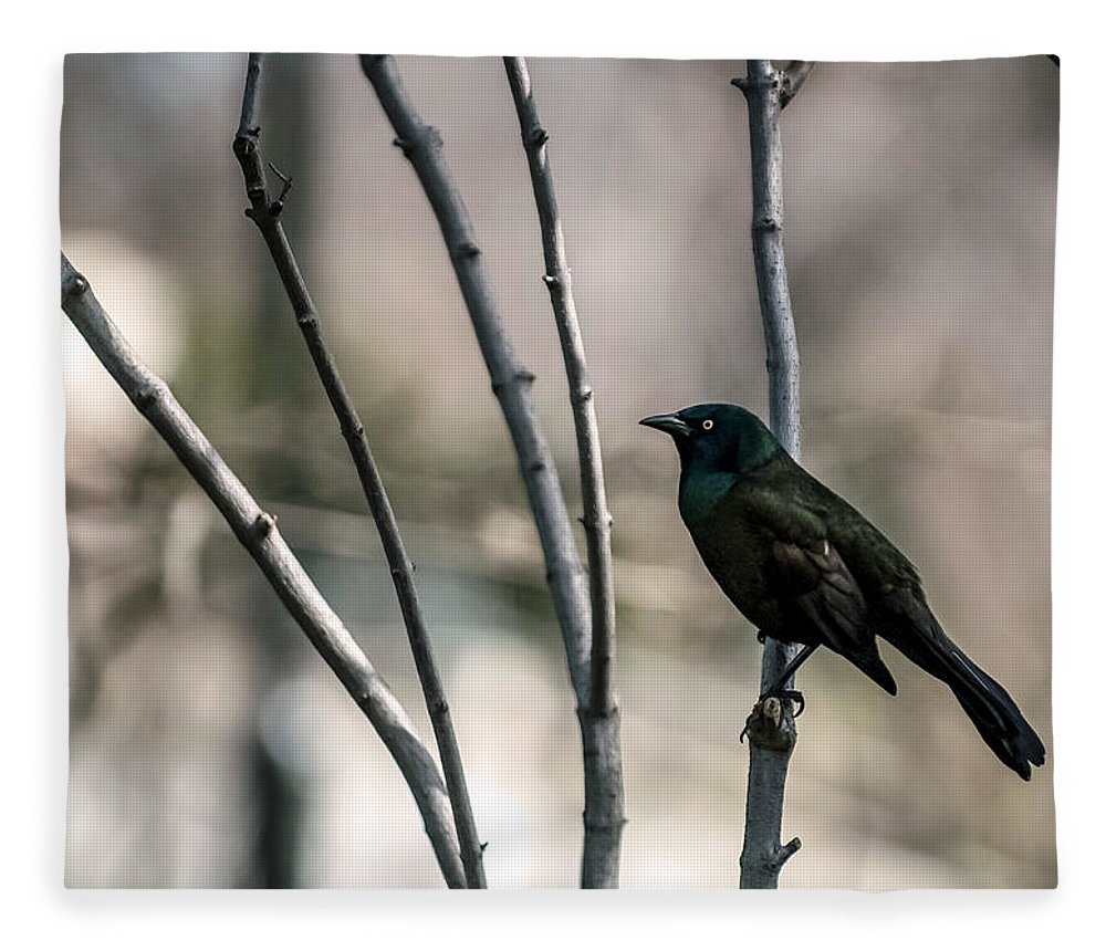 Animal Themes Fleece Blanket featuring the photograph Common Grackle by By Ken Ilio