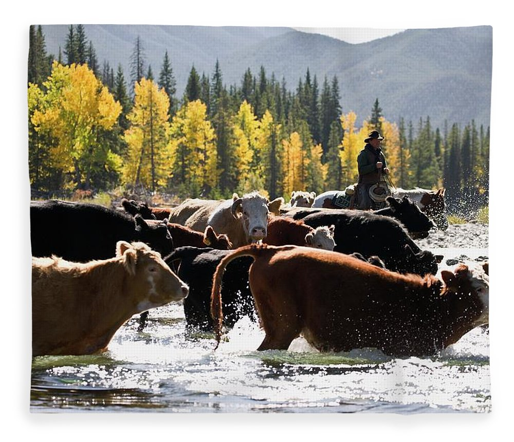 People Fleece Blanket featuring the photograph Cowboy Herding Cattle Across River by Design Pics/carson Ganci