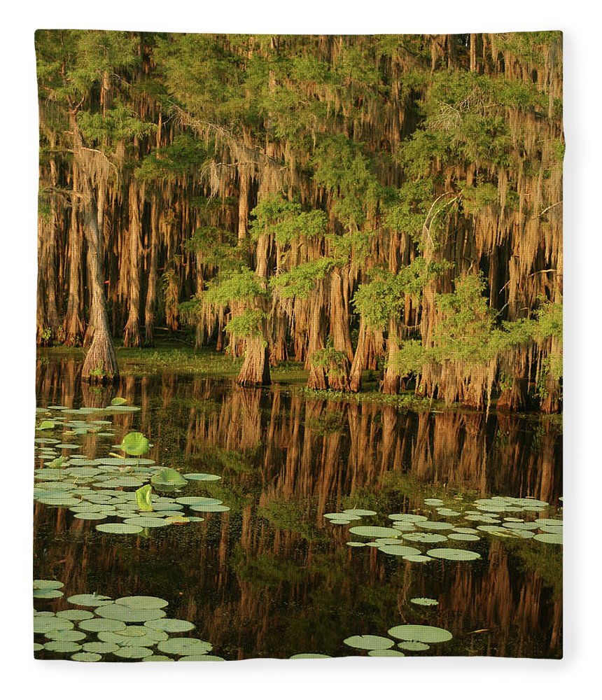 Outdoors Fleece Blanket featuring the photograph Cypress In The Lake by Jlfcapture