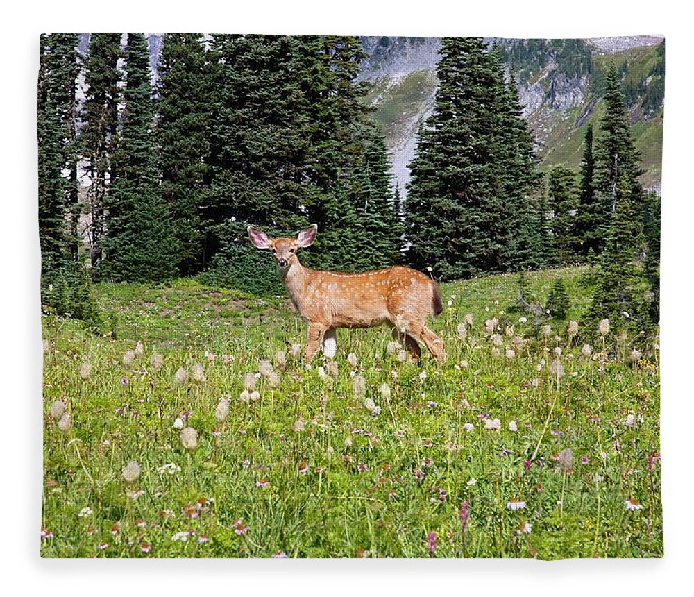 Alertness Fleece Blanket featuring the photograph Deer Cervidae In Paradise Park In Mt by Design Pics / Craig Tuttle