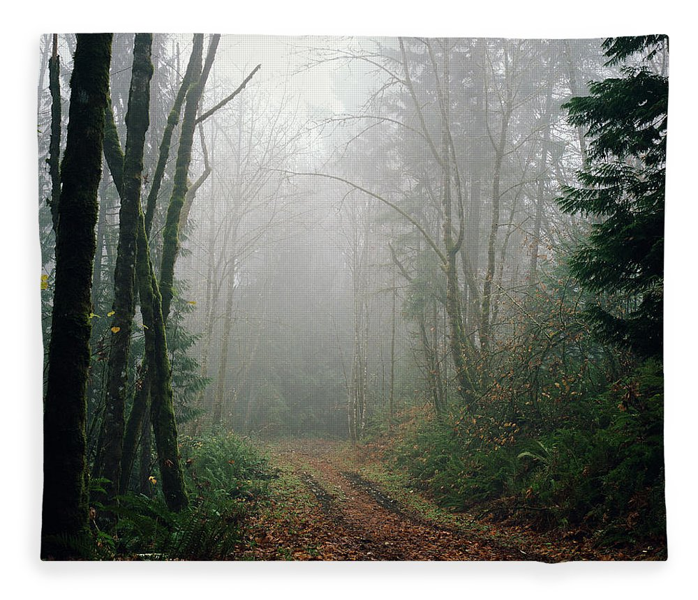 Tranquility Fleece Blanket featuring the photograph Dirt Road Leading Through Foggy Forest by Danielle D. Hughson