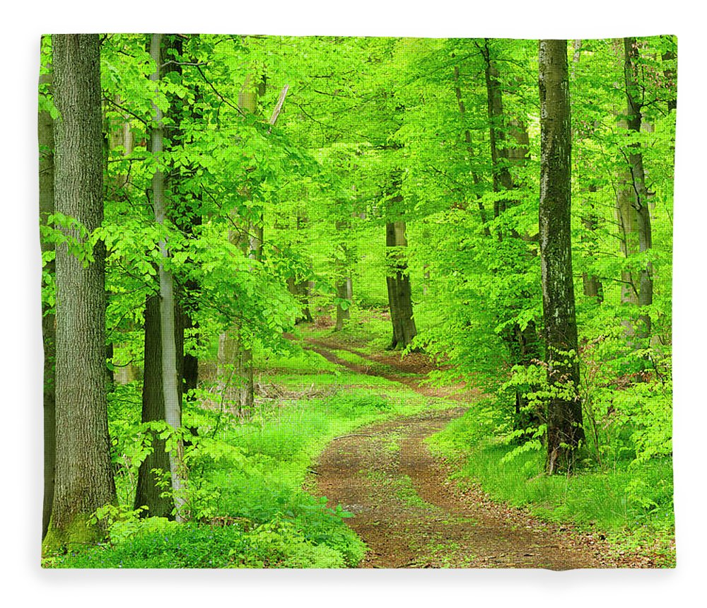Environmental Conservation Fleece Blanket featuring the photograph Dirt Road Through Lush Beech Tree by Avtg