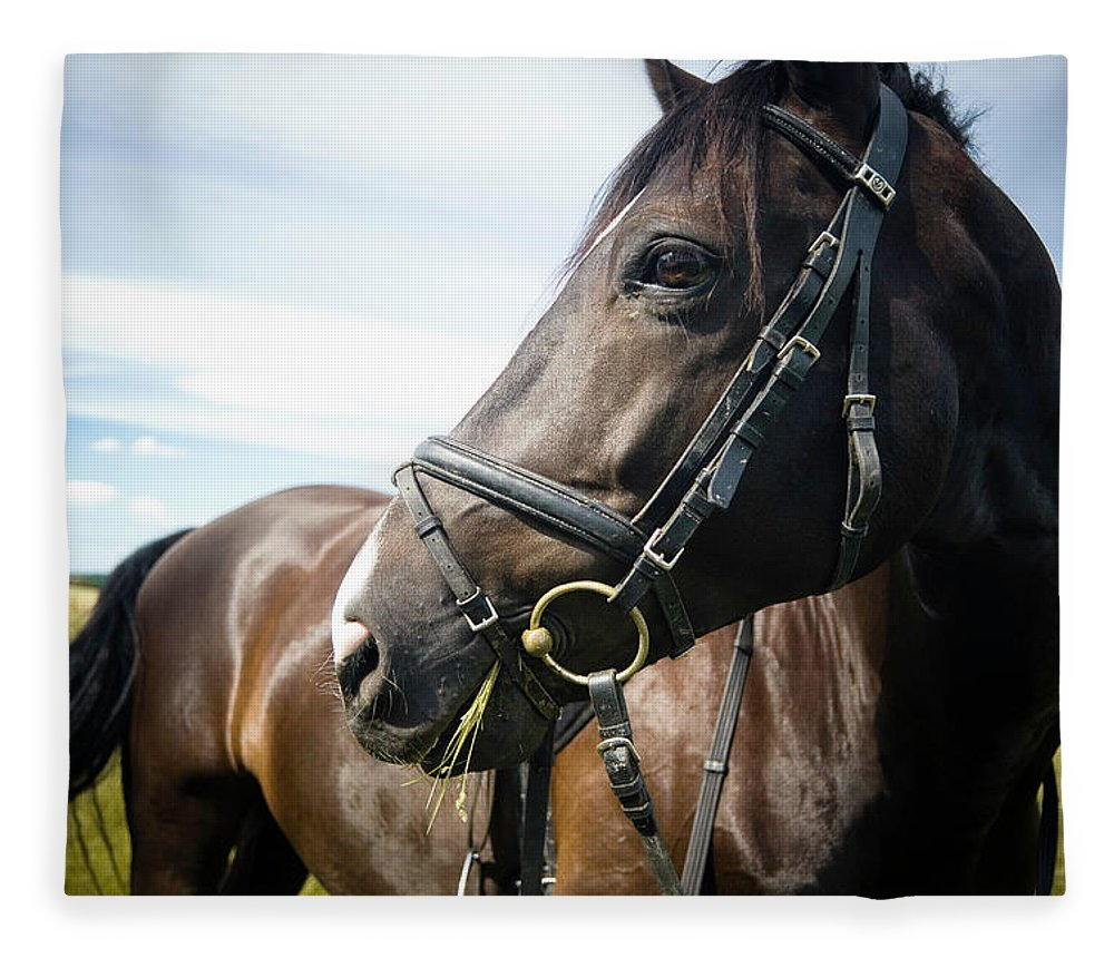 Horse Fleece Blanket featuring the photograph Dont Look Back by Pixalot