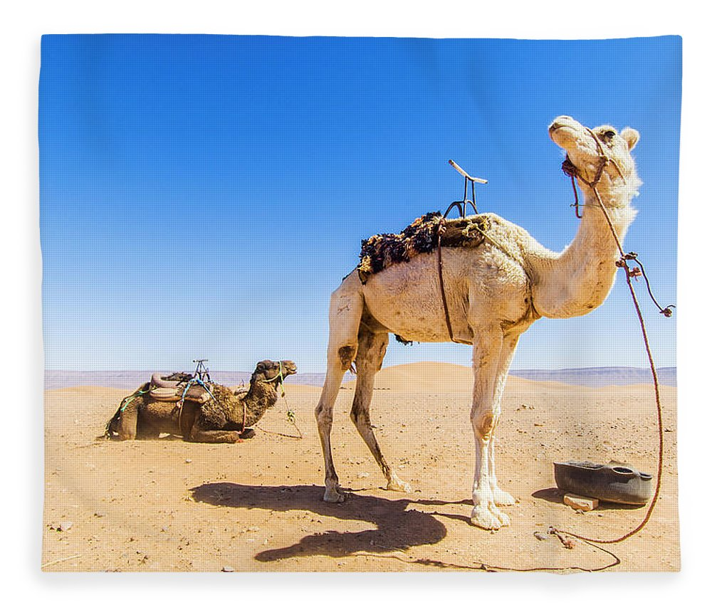 Working Animal Fleece Blanket featuring the photograph Draa Valley, Camel At Tinfou by Maremagnum