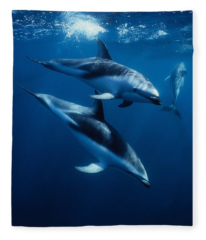 Underwater Fleece Blanket featuring the photograph Dusky Dolphin, Lagenorhynchus Obscurus by Gerard Soury