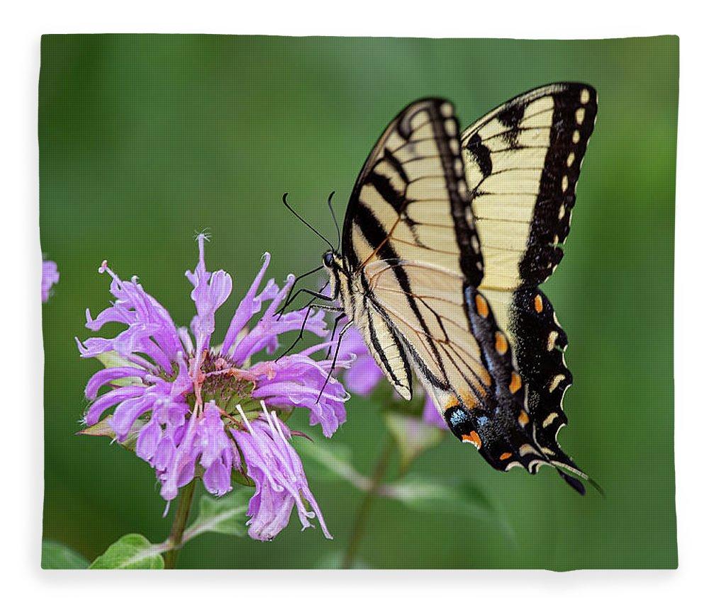 Eastern Tiger Swallowtail Fleece Blanket featuring the photograph Eastern Tiger Swallowtail by Dale Kincaid