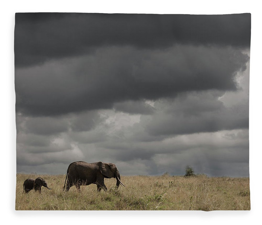 Kenya Fleece Blanket featuring the photograph Elephant Under Cloudy Sky by Buena Vista Images
