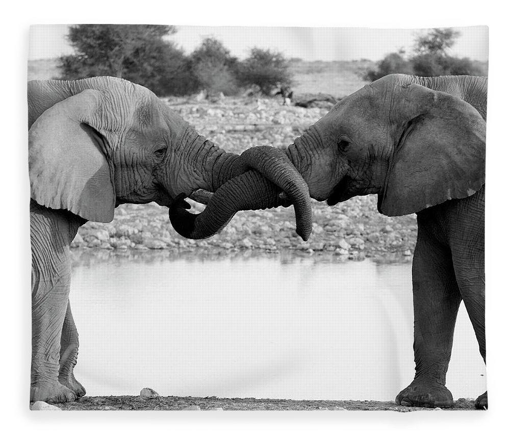 Animal Trunk Fleece Blanket featuring the photograph Elephants Curling Trunk by Harrykolenbrander