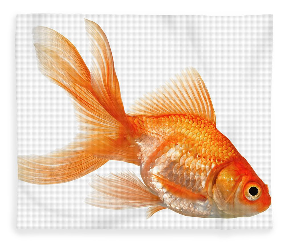 Orange Color Fleece Blanket featuring the photograph Fancy Goldfish by Don Farrall