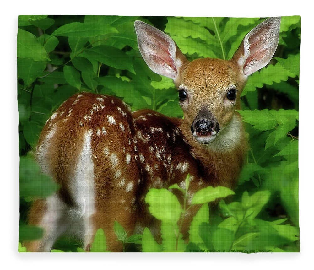 Fawn Fleece Blanket featuring the photograph Fawn by Jerry LoFaro