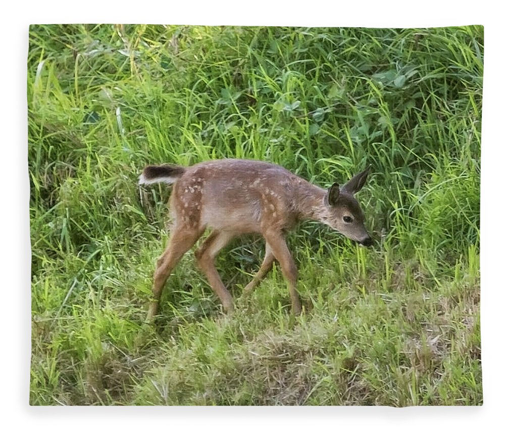 Fawn Fleece Blanket featuring the photograph Fawn On The Mckenzie, No. 4 by Belinda Greb