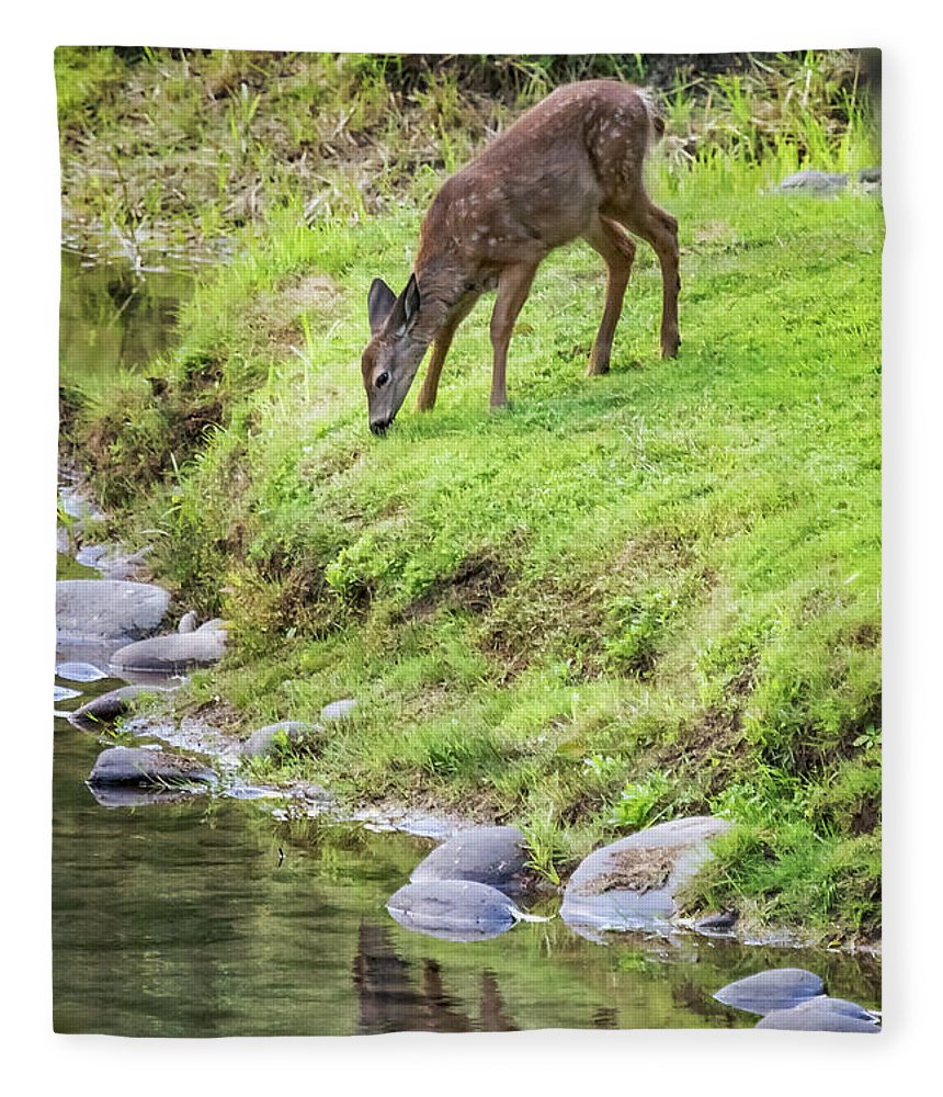 Fawn Fleece Blanket featuring the photograph Fawn On The Mckenzie, No. 5 by Belinda Greb