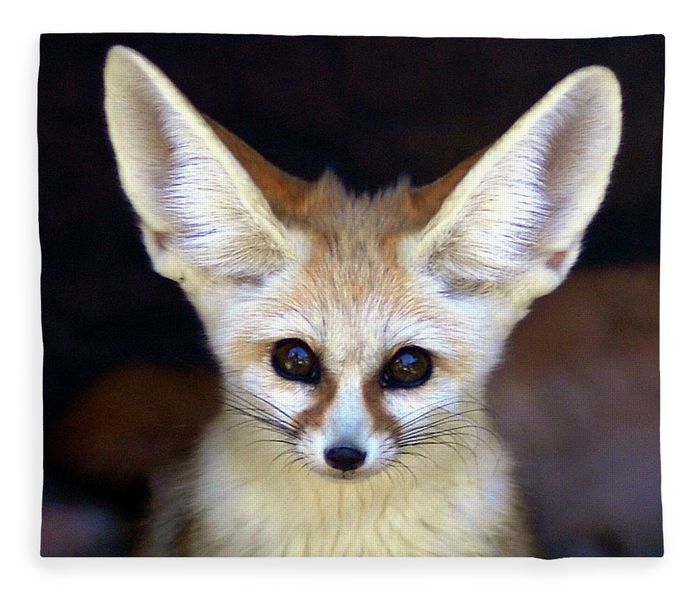 Alertness Fleece Blanket featuring the photograph Fennec Fox by Floridapfe From S.korea Kim In Cherl