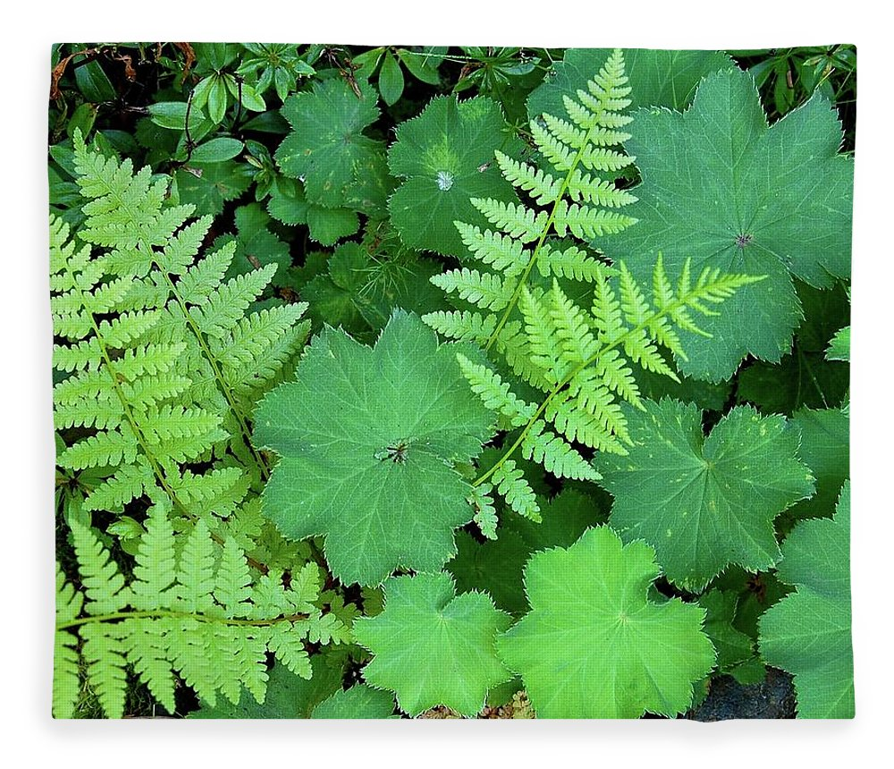 Outdoors Fleece Blanket featuring the photograph Ferns And Ladys Mantle by Pamela Long
