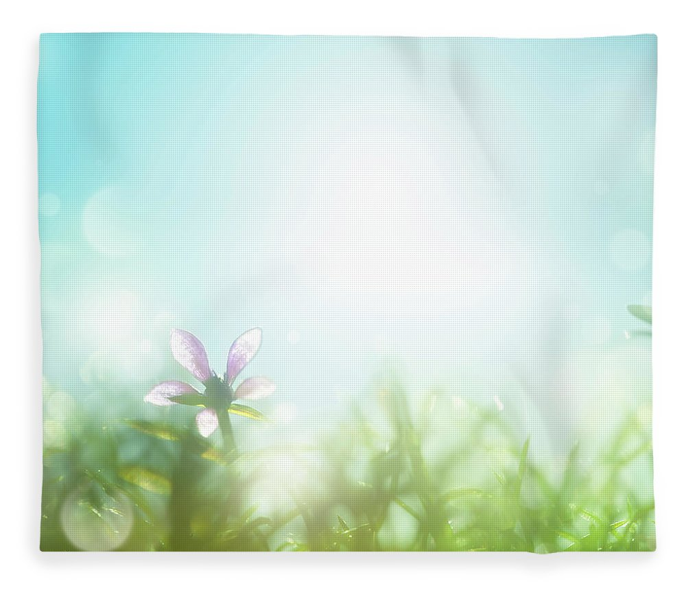 Grass Fleece Blanket featuring the photograph Field With Daisies In The Early Morning by Jeja