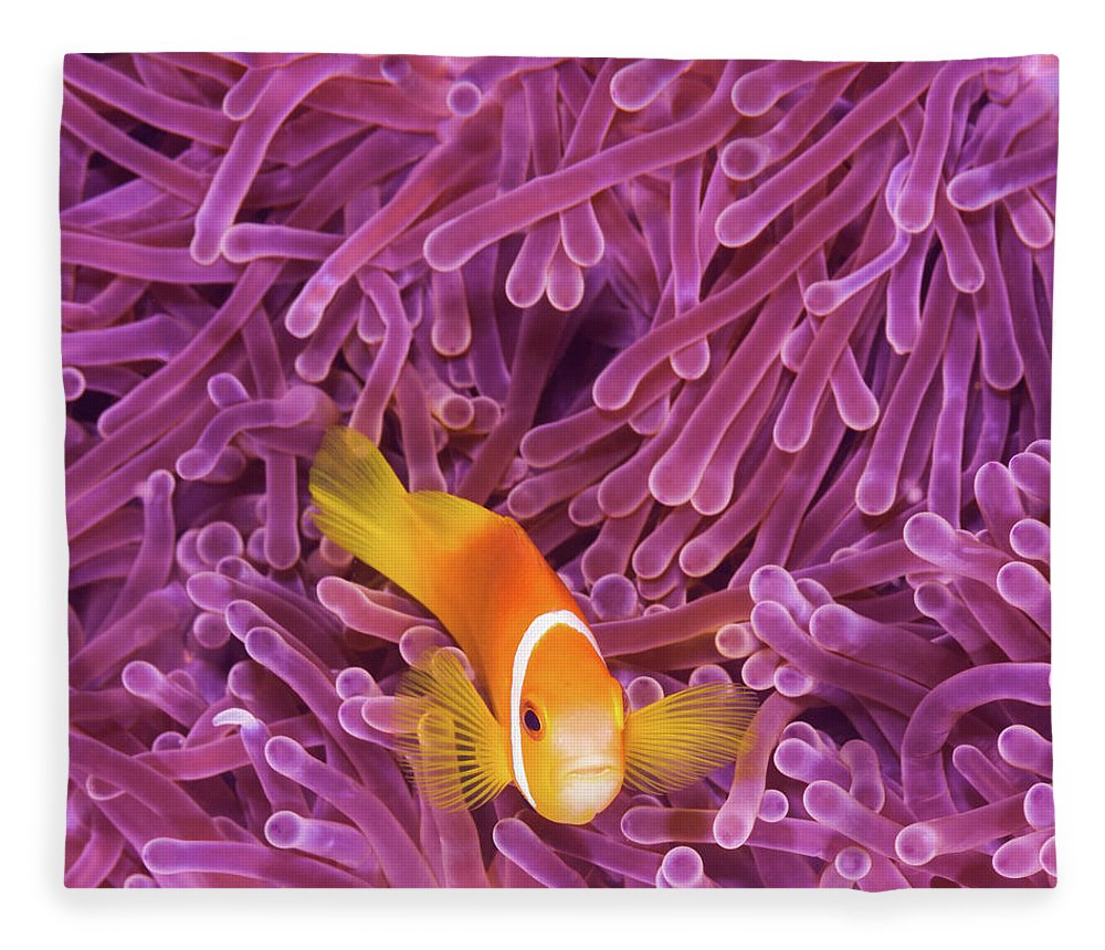 Underwater Fleece Blanket featuring the photograph Fish by Extreme-photographer