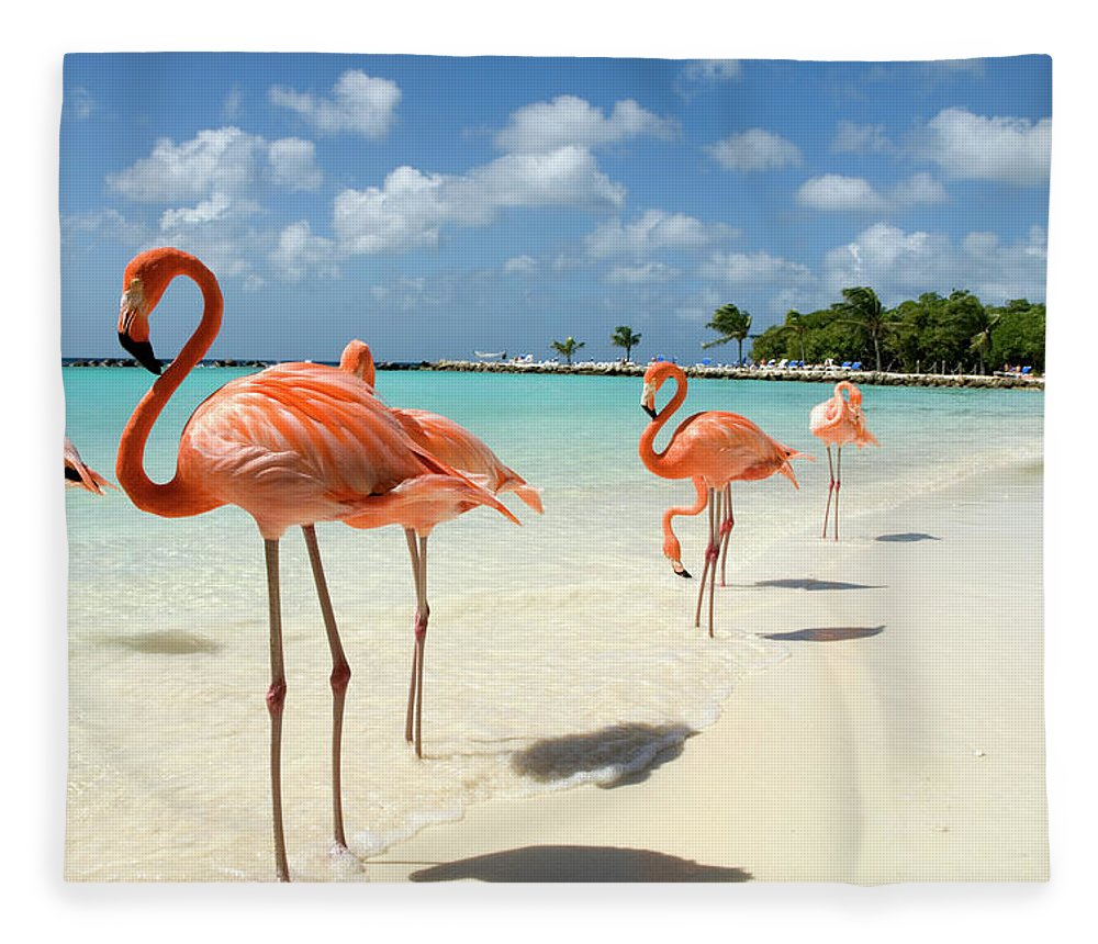 Shadow Fleece Blanket featuring the photograph Flamingos On The Beach by Vanwyckexpress
