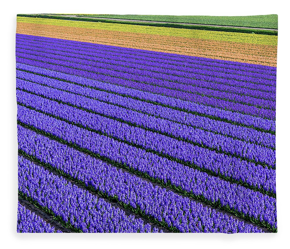 Tranquility Fleece Blanket featuring the photograph Flower Fields In Spring In Holland by Frans Sellies