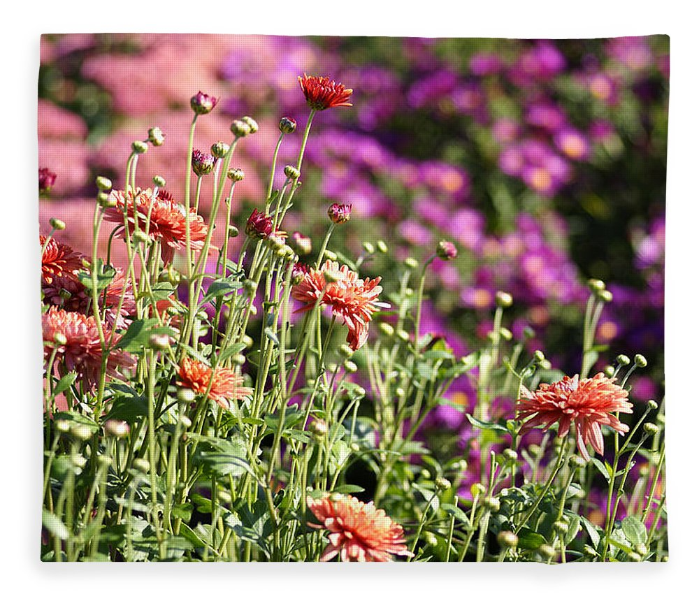 Flowerbed Fleece Blanket featuring the photograph Flowerbed With Michaelmas Daisies by Schnuddel