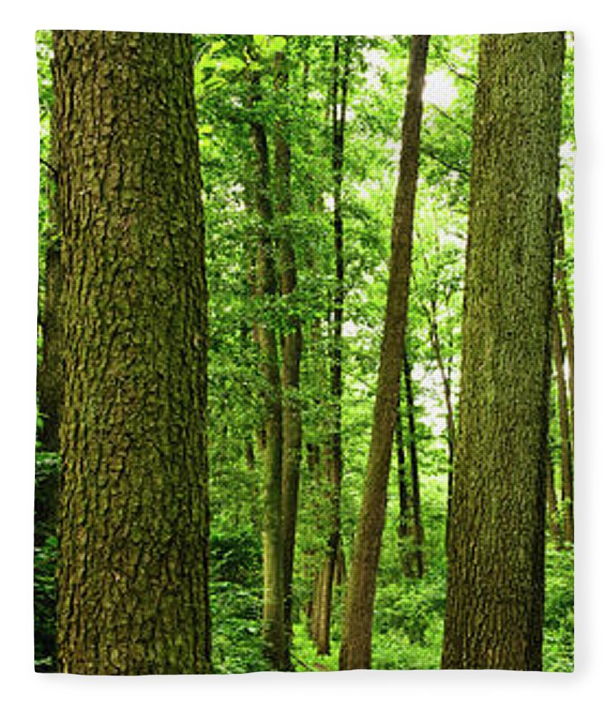 Scenics Fleece Blanket featuring the photograph Footpath Between The Trees by Tomchat
