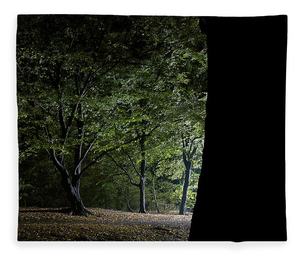 Gothic Style Fleece Blanket featuring the photograph Forest Glow Trees Lit At Night by Peskymonkey