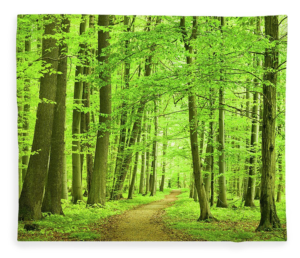 Curve Fleece Blanket featuring the photograph Forest Path by Nikada