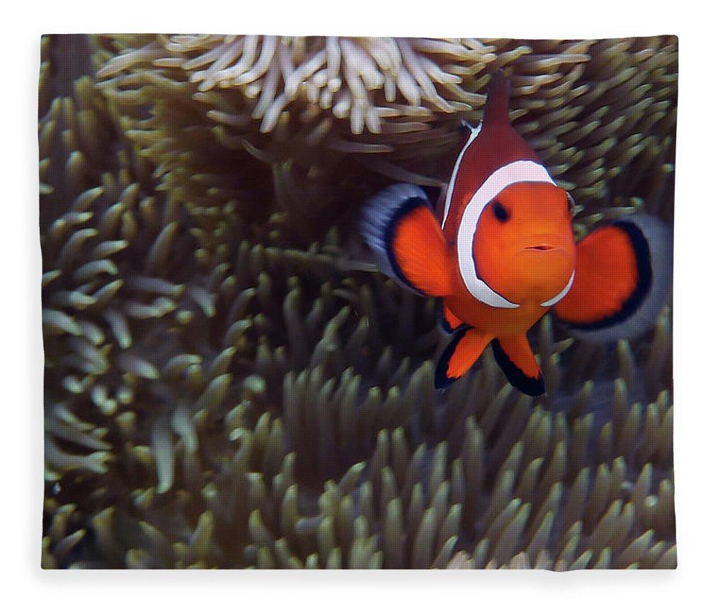 Underwater Fleece Blanket featuring the photograph Found Nemo by Klaus Brandstaetter