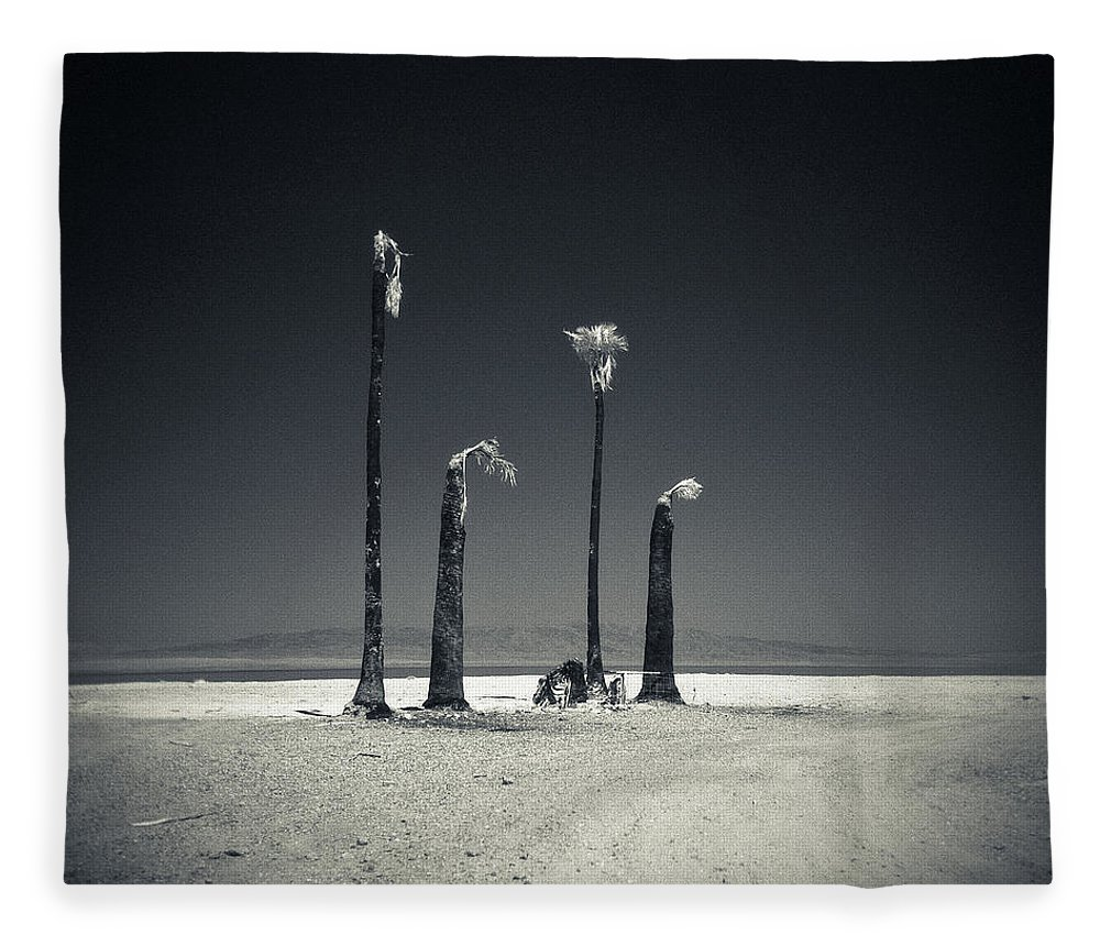 Environmental Damage Fleece Blanket featuring the photograph Four Burnt Palm Trees On The Salton Sea by David Teter