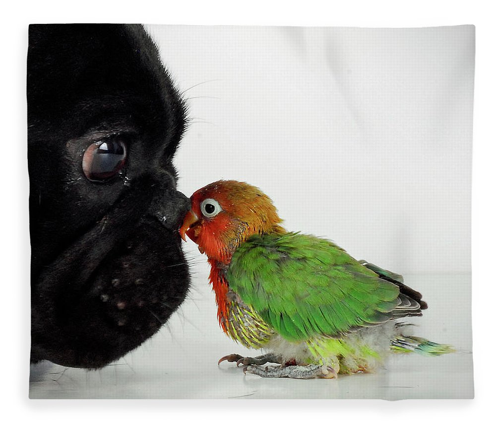 Pets Fleece Blanket featuring the photograph French Bulldog And Lovebird by Mascotas Y Varios