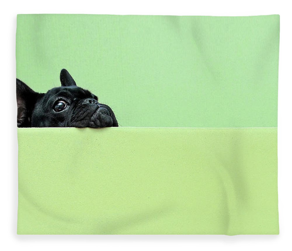 Pets Fleece Blanket featuring the photograph French Bulldog Puppy by Retales Botijero