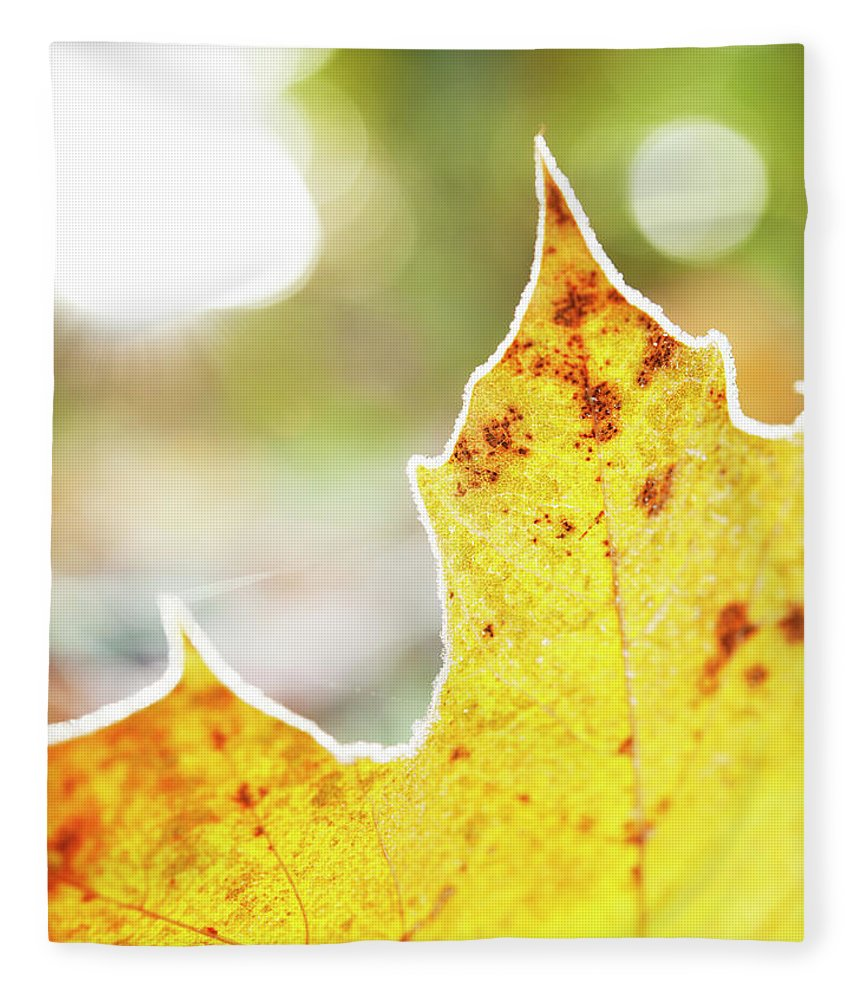 Scenics Fleece Blanket featuring the photograph Frost On Autumn Leaf, Detail by Johner Images