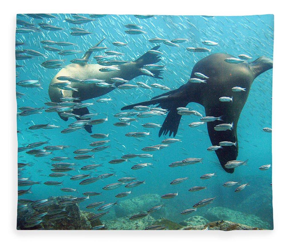 Underwater Fleece Blanket featuring the photograph Galapagos Sea Lion by Bettina Lichtenberg