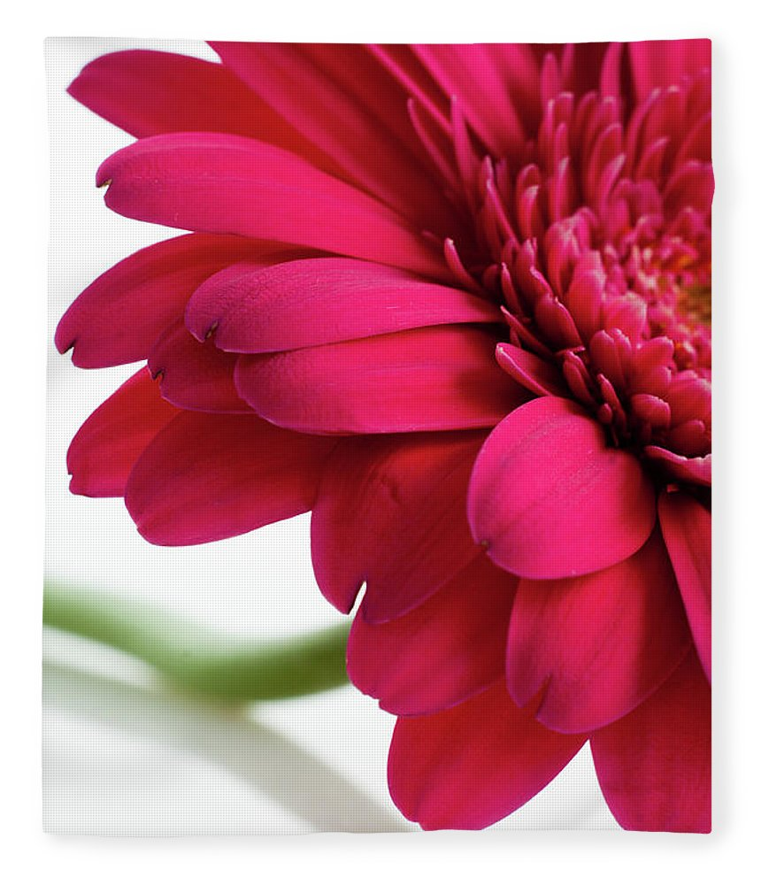 Flowerbed Fleece Blanket featuring the photograph Gerbera Daisy by Subman