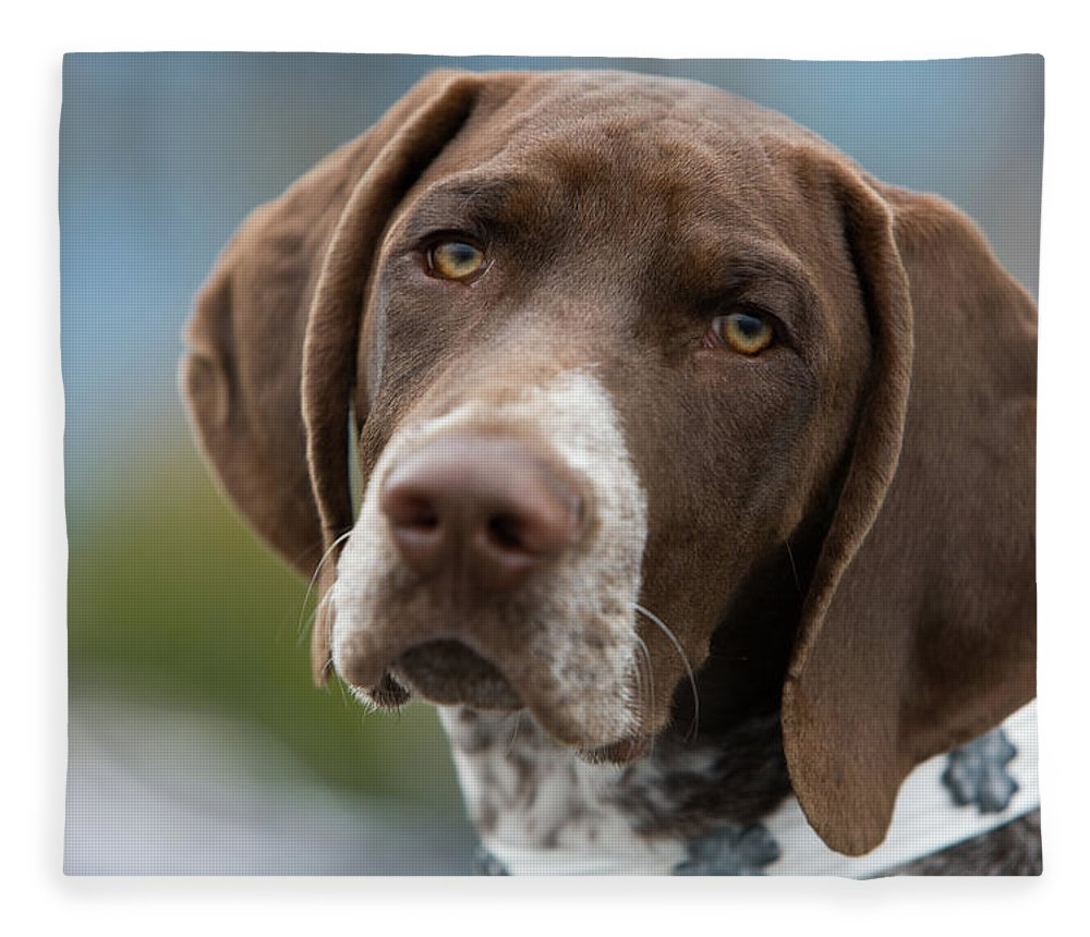 Pets Fleece Blanket featuring the photograph German Shorthair Pointer With Building by Markhatfield