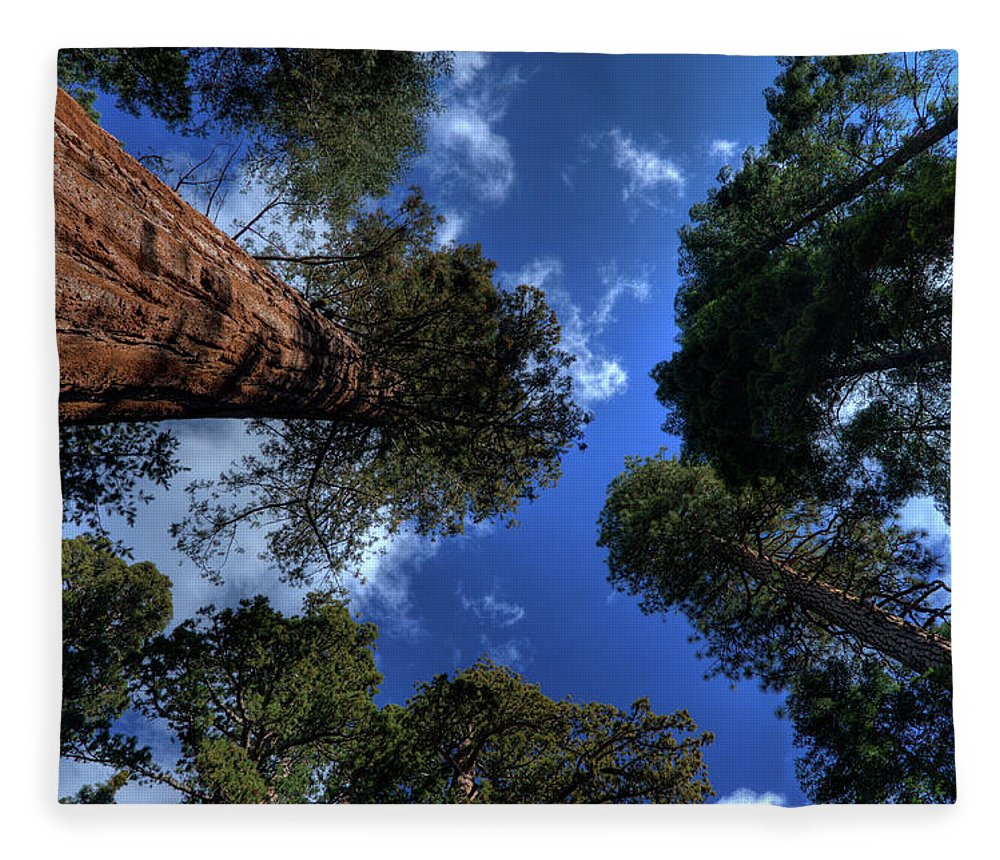 Sequoia Tree Fleece Blanket featuring the photograph Giant Sequoias - 2 by Rhyman007